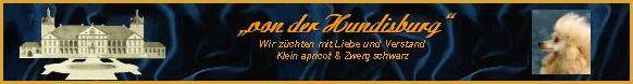 Kleinpudel in apricot & Zwergpudel in schwarz